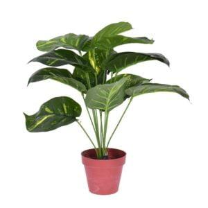 Konstväxt Grön växt Grön