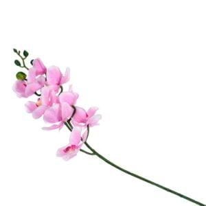 Konstväxt Orkidé Rosa