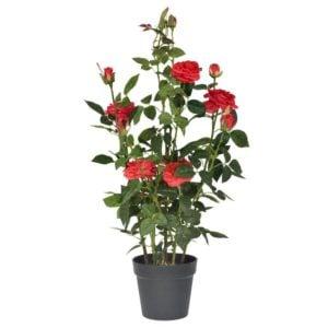 Konstväxt Rosbuske Rosa