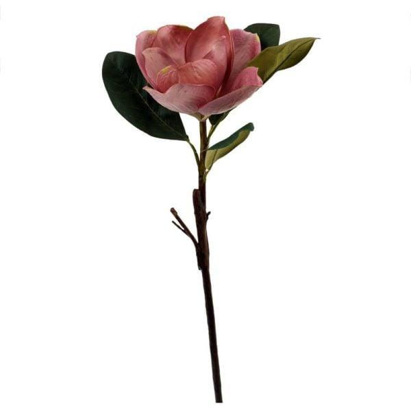 Konstväxt Växt blomma Rosa